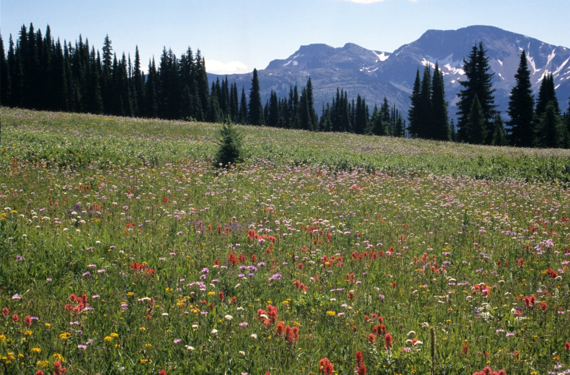 Trophy Meadows with Raft Mountain
