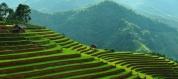 Mu Chang Chai rice fields, Vietnam