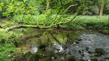 Magical woodland.